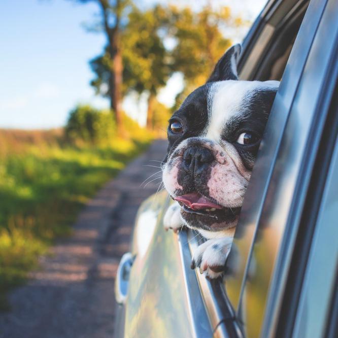 Car Safety Basics: Hot Cars Kill